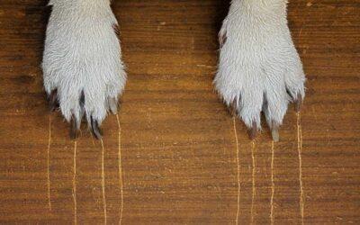 Hoe voorkom je schade aan je parket door je huisdier?